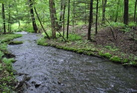 Streamside Retreat - Year-round stream
