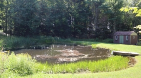Land with pond and cabin in Harpersfield - Open meadow with level build site