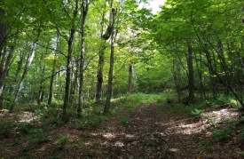 Wilderness Land to Explore in Roxbury - Wooded and Private
