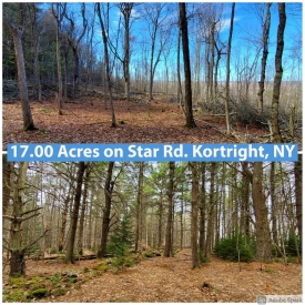 Wooded Lot On Private Road in Kortright - Wooded Lot On Private Road in Kortright