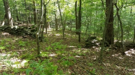 37+ Wooded Acres - 37+ Wooded Acres
