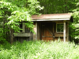 A Walk In The Woods - Outbuilding & Tent Platform