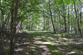 Hunting in the Catskills - 50 acres - 50 Acres - Hunting in the Catskills