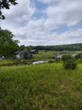 Own the farm  DRASTIC REDUCTION - Gently rolling land