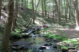 The Upstate Escape - 57+ Acres with Year Round Trout Stream